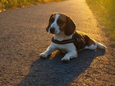 Der Tierarzt der guten Hoffnung