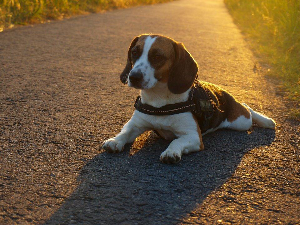 Peppi im Sonnenuntergang