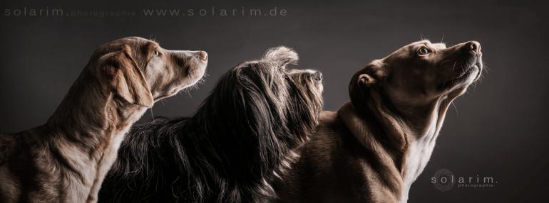 Paula Lotte Veilchen – Gastautorin aus Schwaben