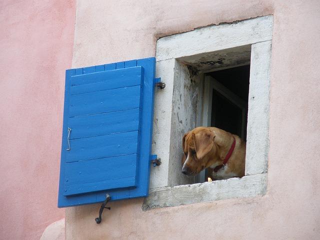 Der sommerliche Städtetrip mit dem Hund – Tipps und Anregungen