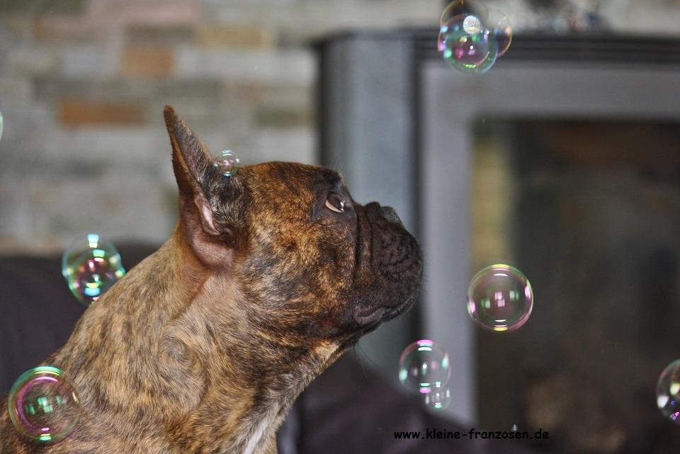Bully bewundert Seifenblasen