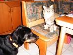 Hund vs Katze - wer ist hier der Boss?