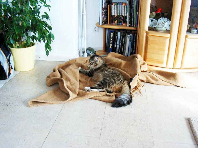 Katze Chico auf Hundedecke
