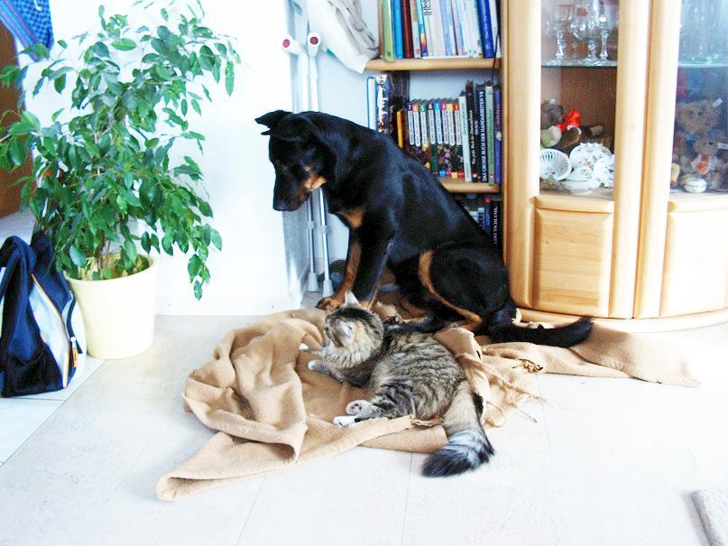 Katze Chico und Hund Charly auf Hundedecke