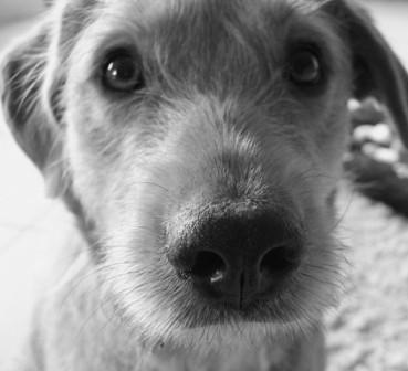 Gesunder Hund auch im Urlaub – die Reiseapotheke