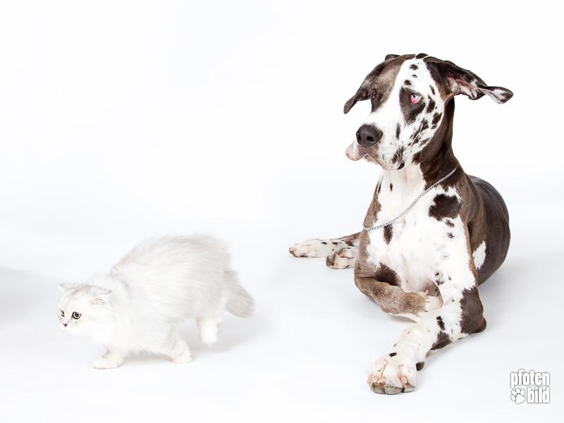 Hundefotografie - professionelles Hunde- und Katzenfoto