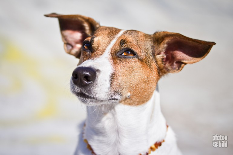 Hundefotografie – Tipps vom Profi