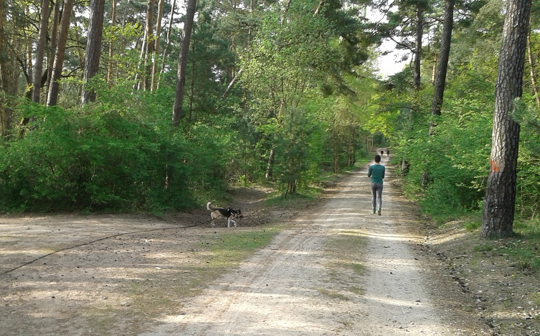 Telmo 2: Telmo mit Schleppleine beim Waldspaziergang