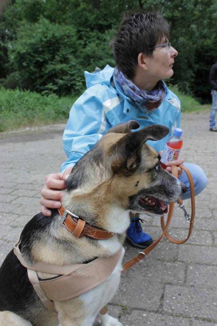 Telmo 3: Telmo und Antje sehen in der Hundeschule einem anderen Hund bei einer Übung zu