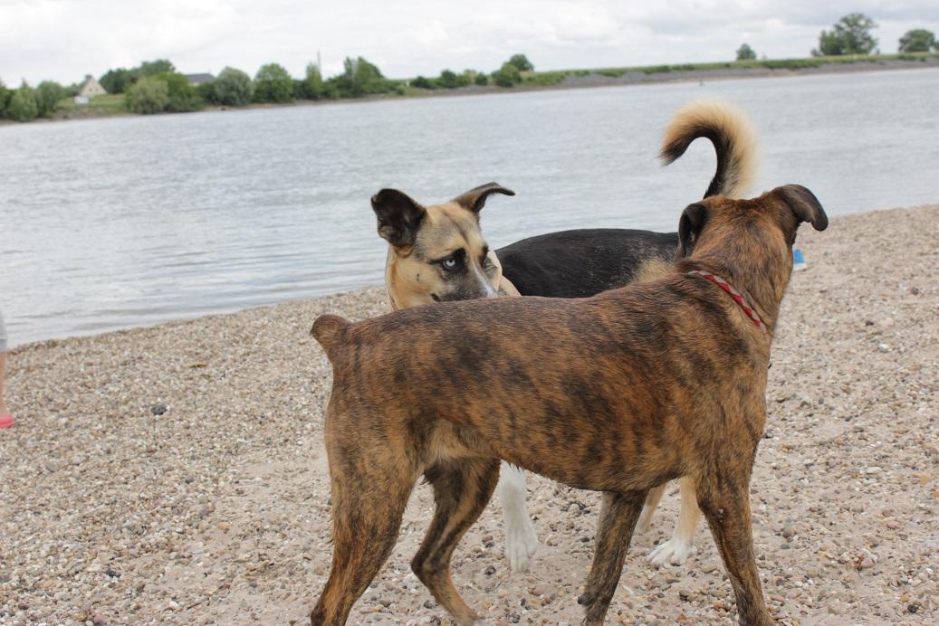 Telmo 4: Telmo lernt einen anderen Artgenossen kennen