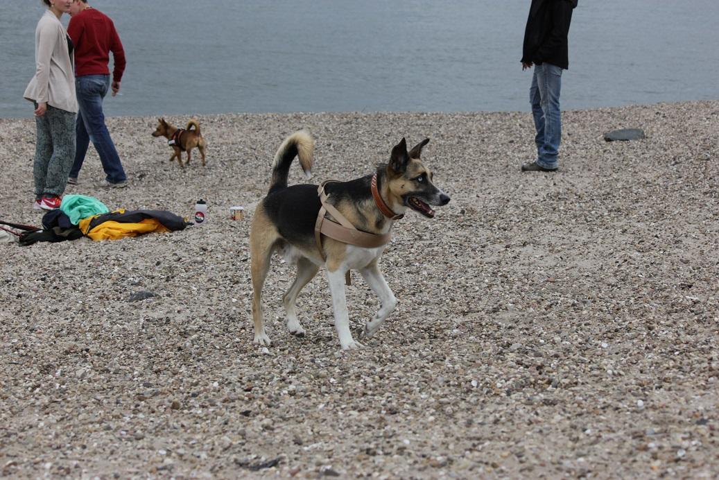 Telmo 5: Telmo erkundet den Hundestrand auf eigene Faust