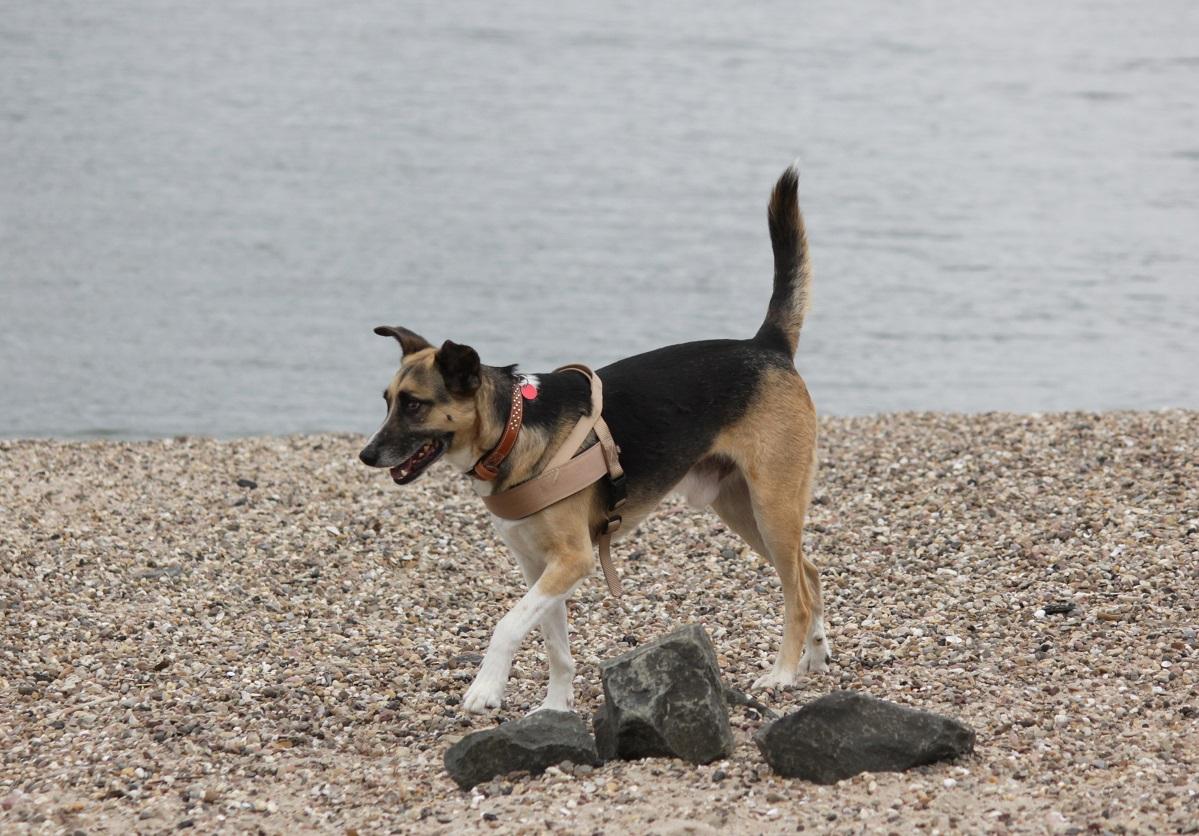Telmo 6: Telmo erkundet den Hundestrand auf eigene Faust