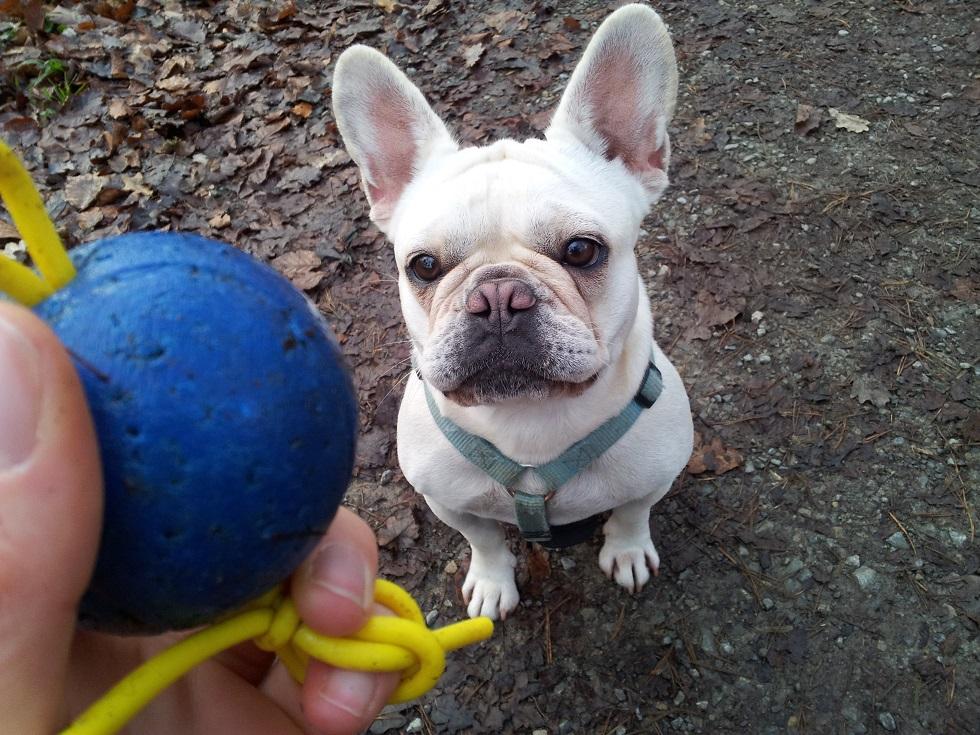 Wili und der Ball