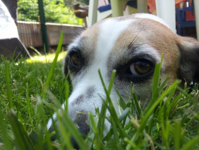 Der unschuldige Hund