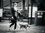 Stadt Hund
