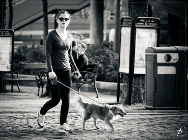 Stadt, Hund, Stress?