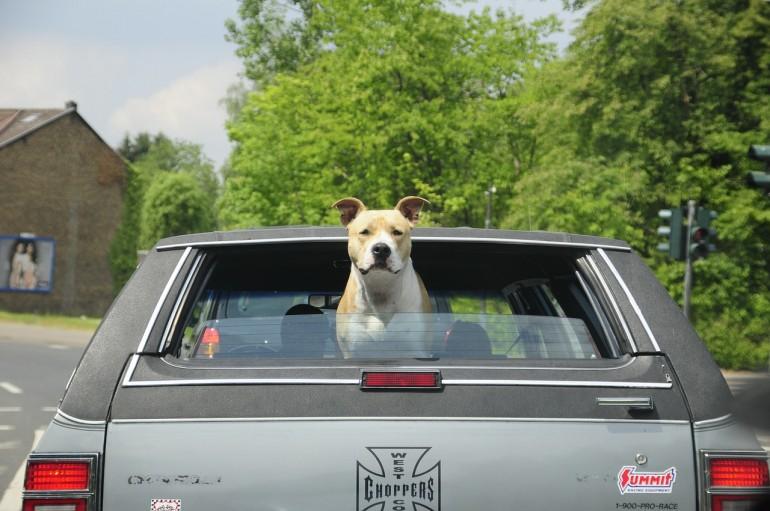 Der Hund im Sommer