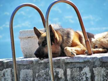 Hitzeschlag beim Hund