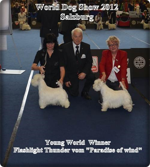 West Highland White Terrier bei World Dog Show 2012