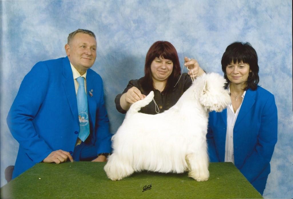 West Highland White Terrier wird präsentiert