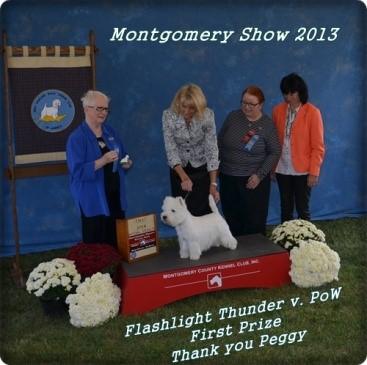 West Highland White Terrier bei der Montgomery Show 2013