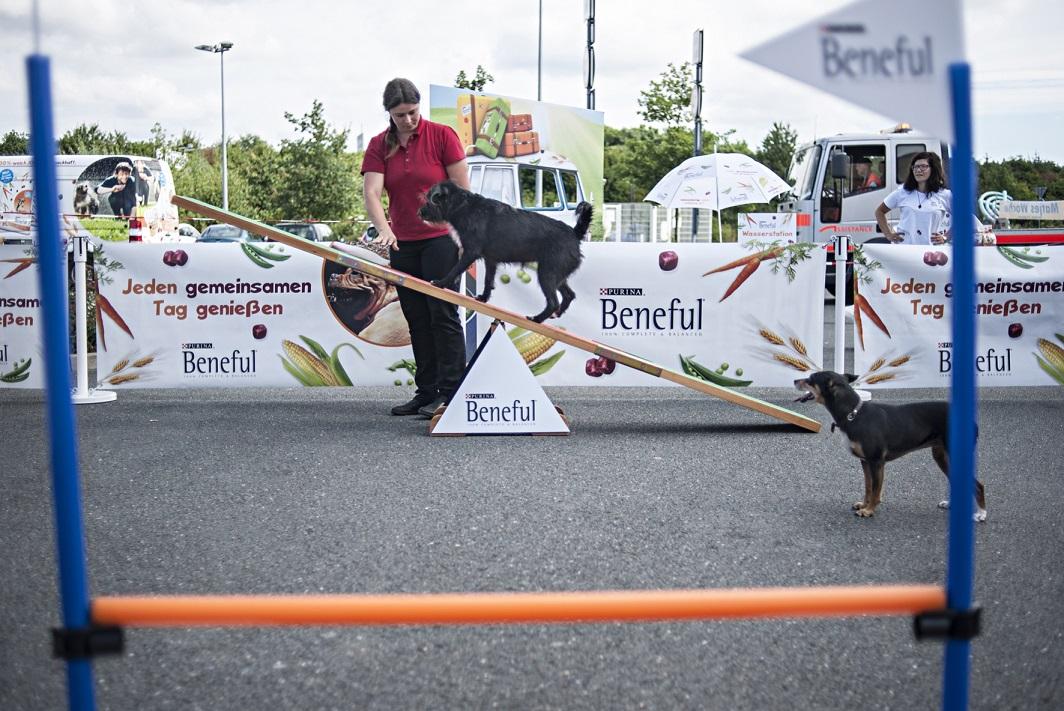 Beneful Sommeraktion Hund auf Wippe