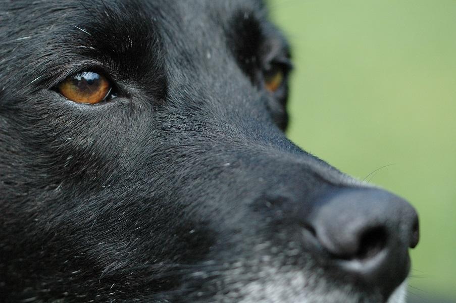 CoDo intensiver Fernblick vom Hund