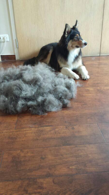 Hunde lieber Bürsten statt Abscheren
