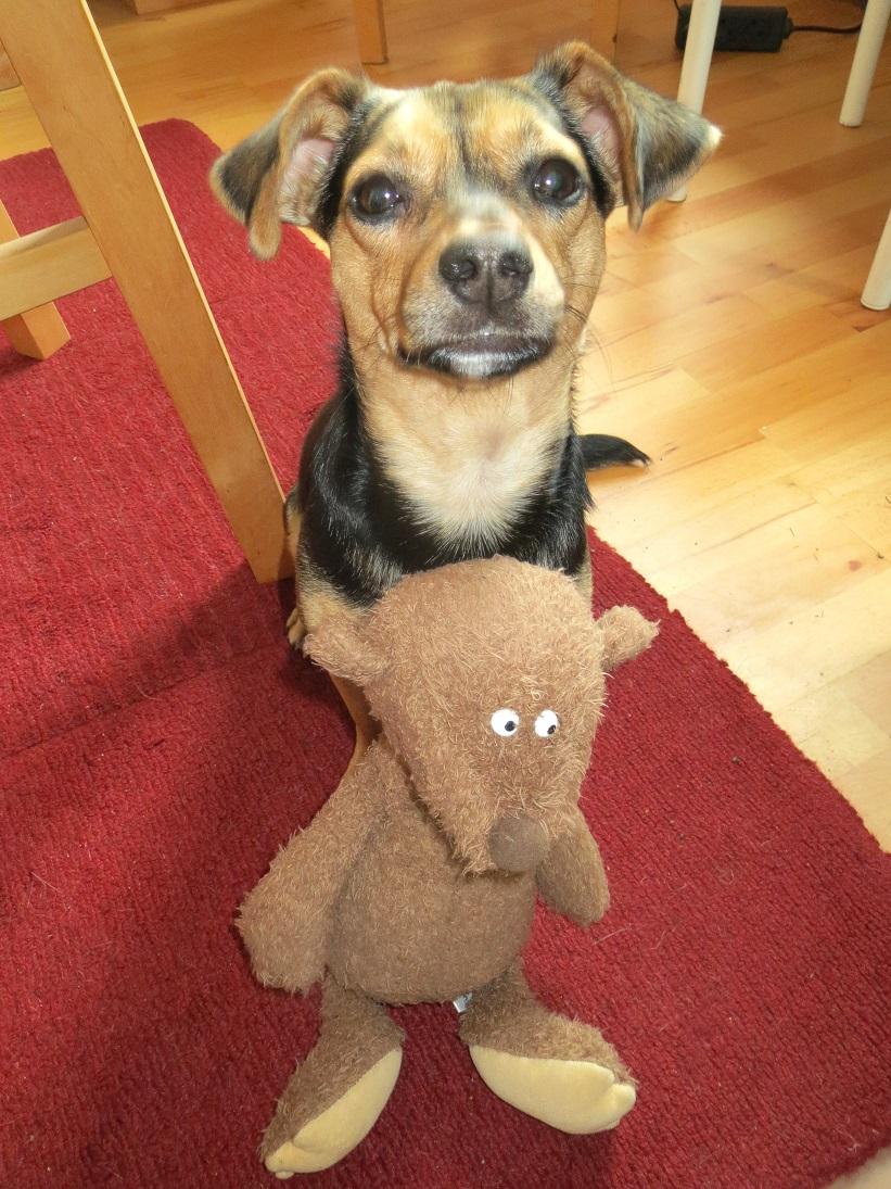 ach goood mit Hund