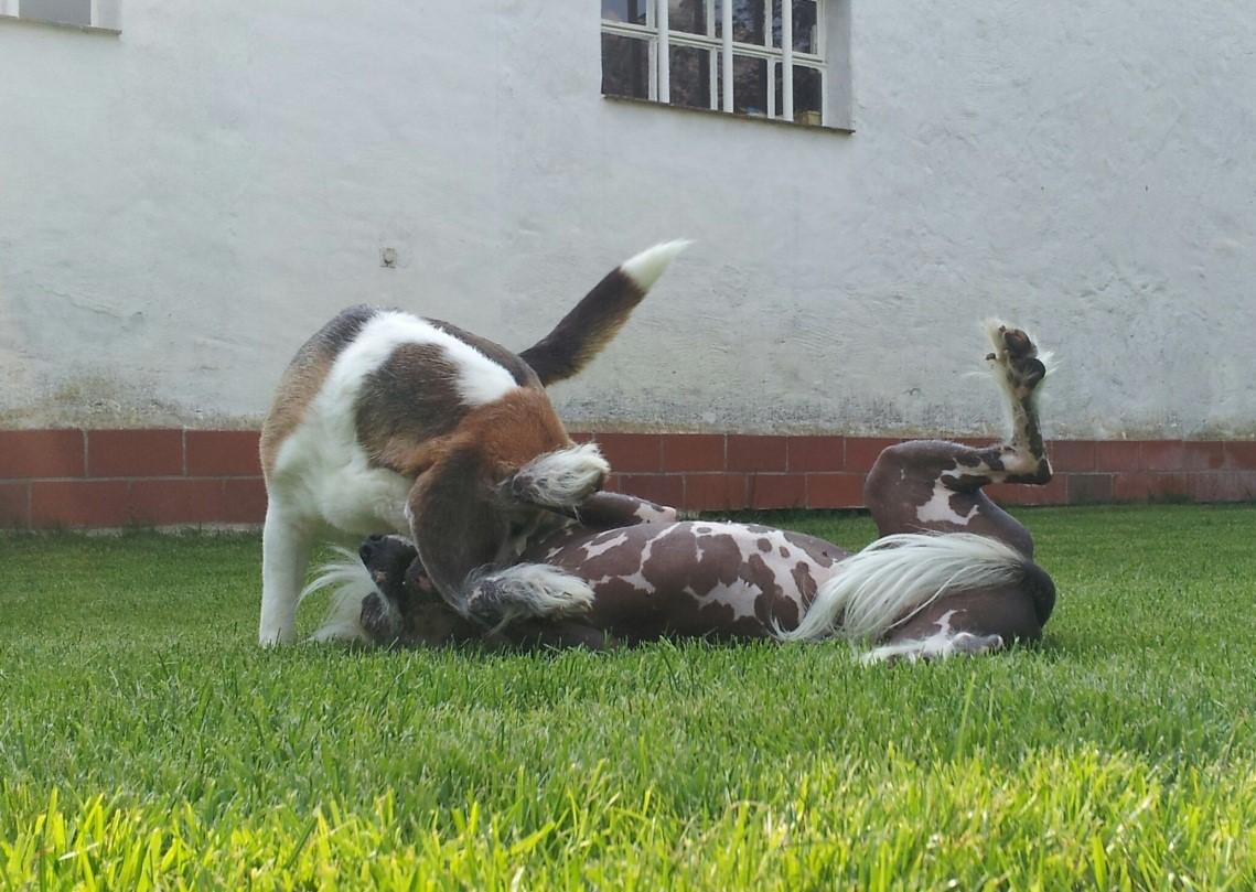 peppi spielt mit anderem hund