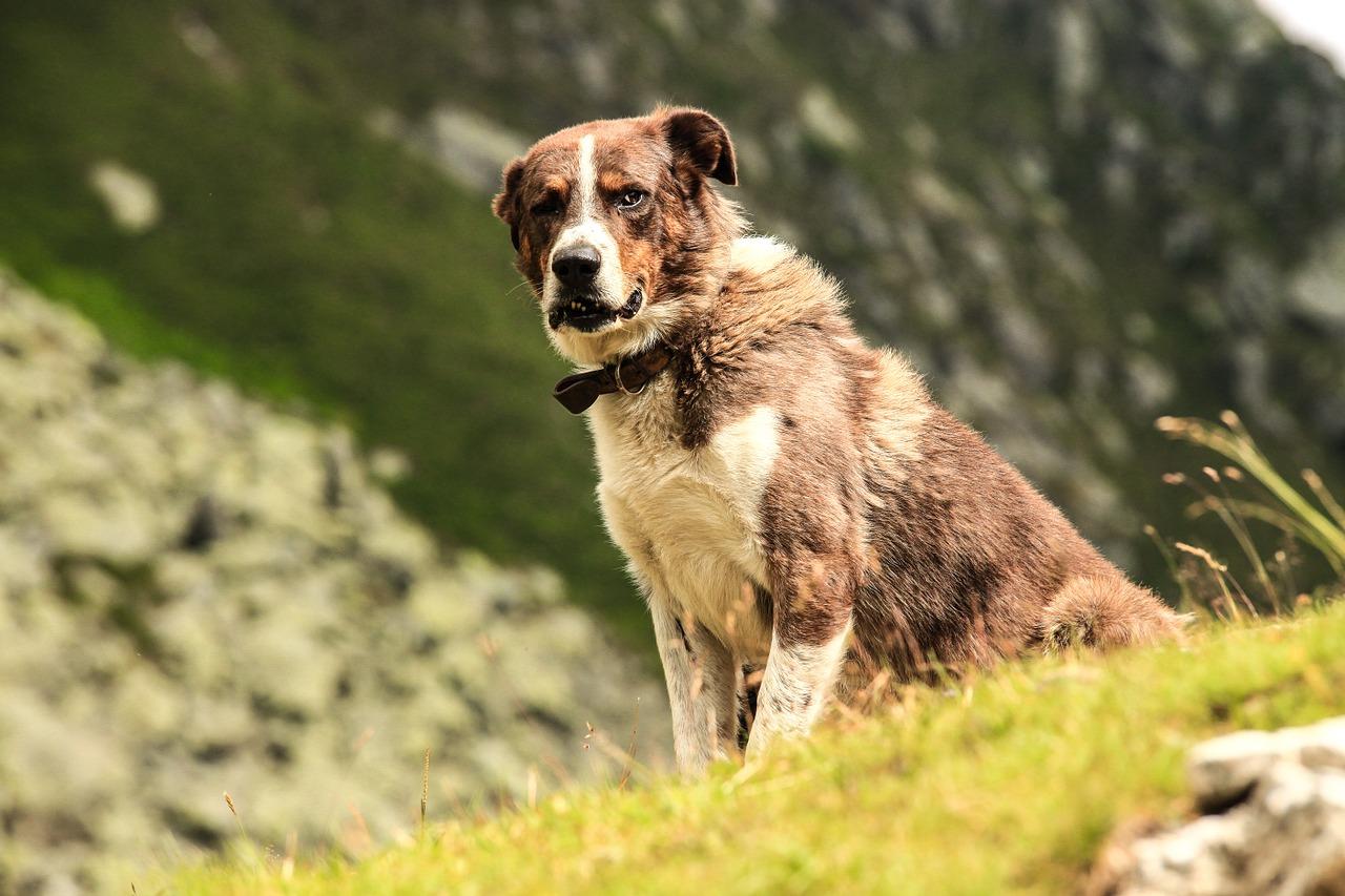 Wandern mit Hund am Berg