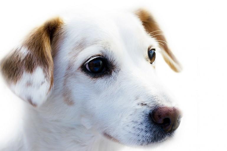 Gaumenglück und ein unheimlich süßes Hundevideo