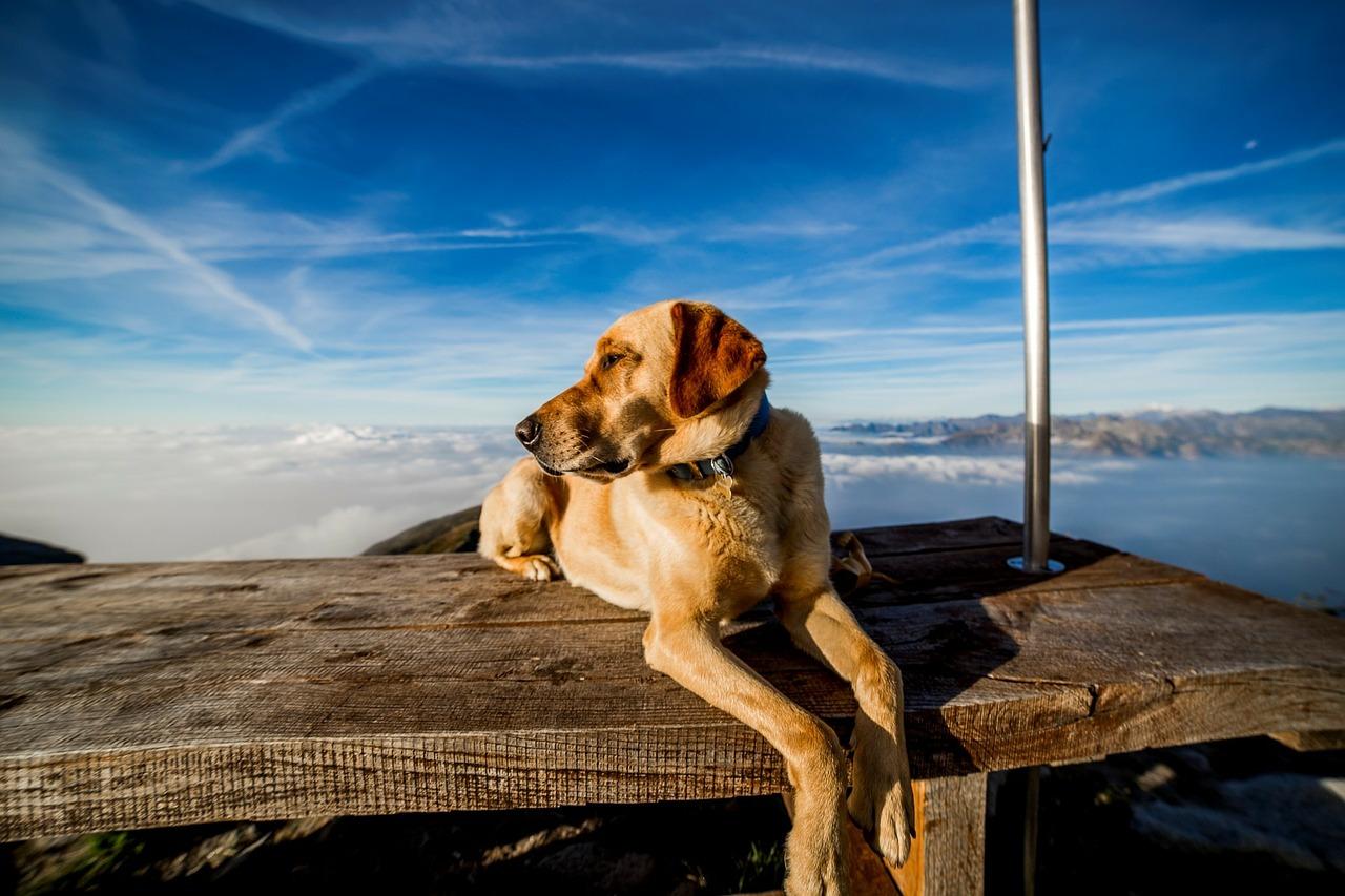 Der Berg ruft: Was ihr beim Wandern mit Hund beachten solltet