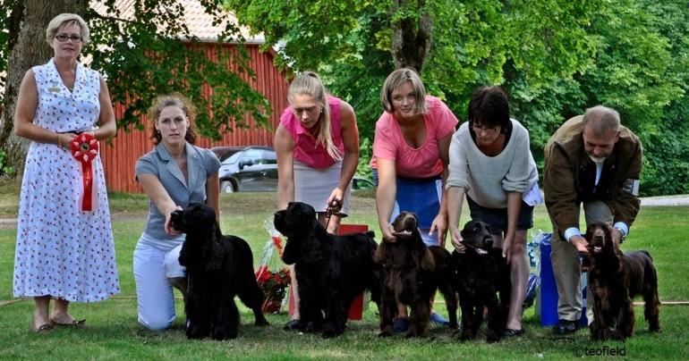 Field Specialen 2014 – die größte Ausstellung von Field Spaniels in Skandinavien