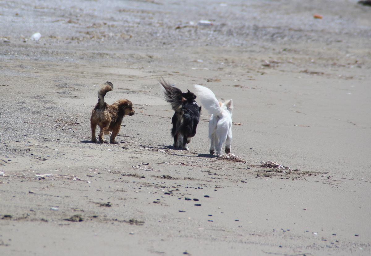 Pflegehunde am Strand