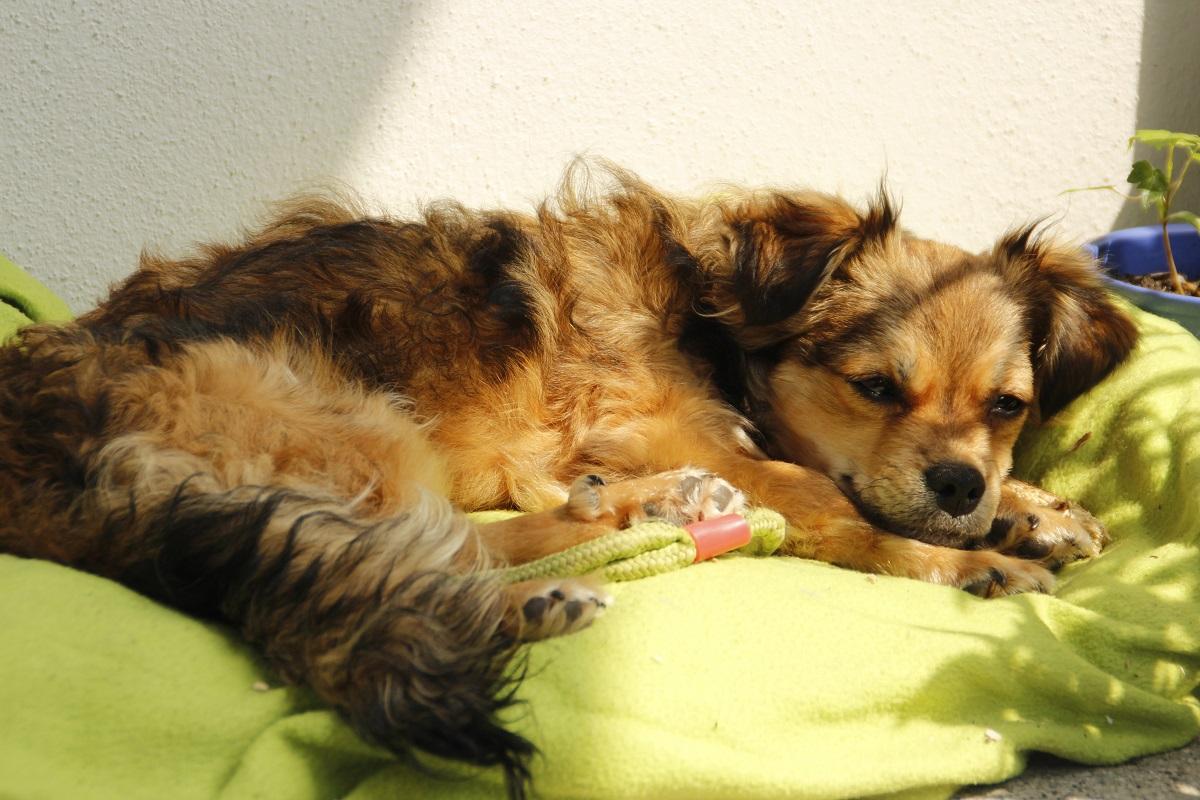 Pflegehund Anton schläft