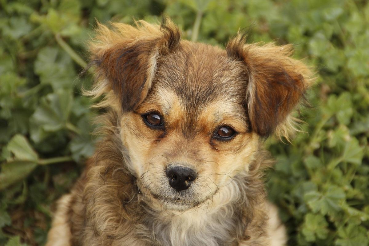 Pflegehund Anton