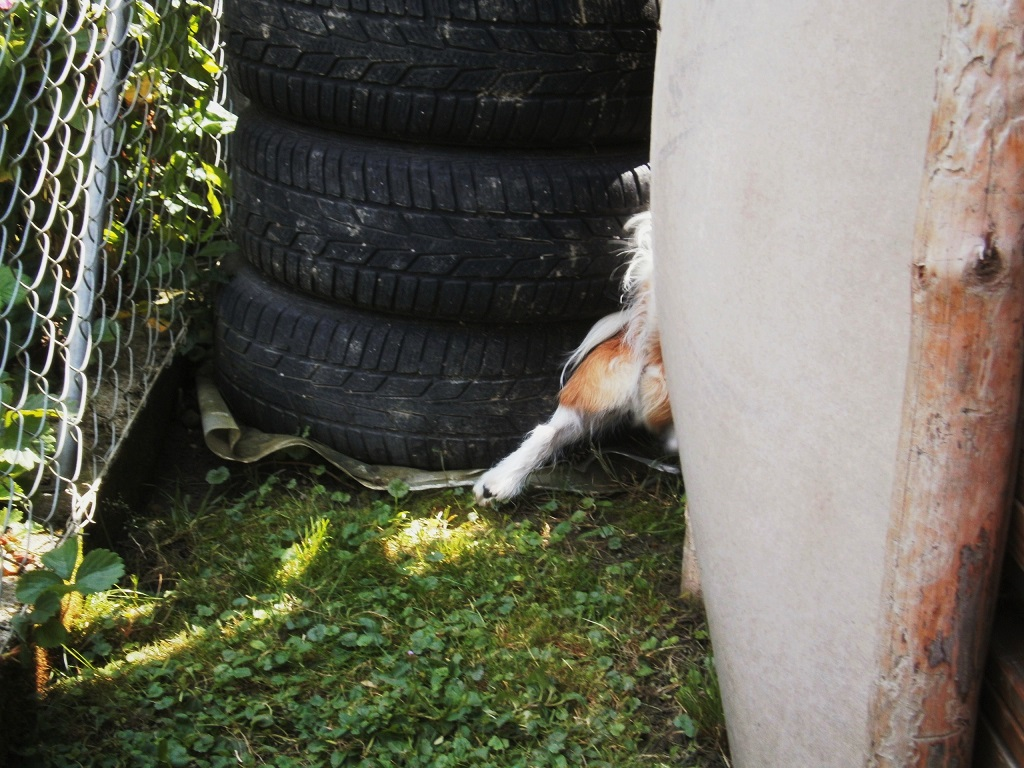 Hund Charly hinter den Reifen