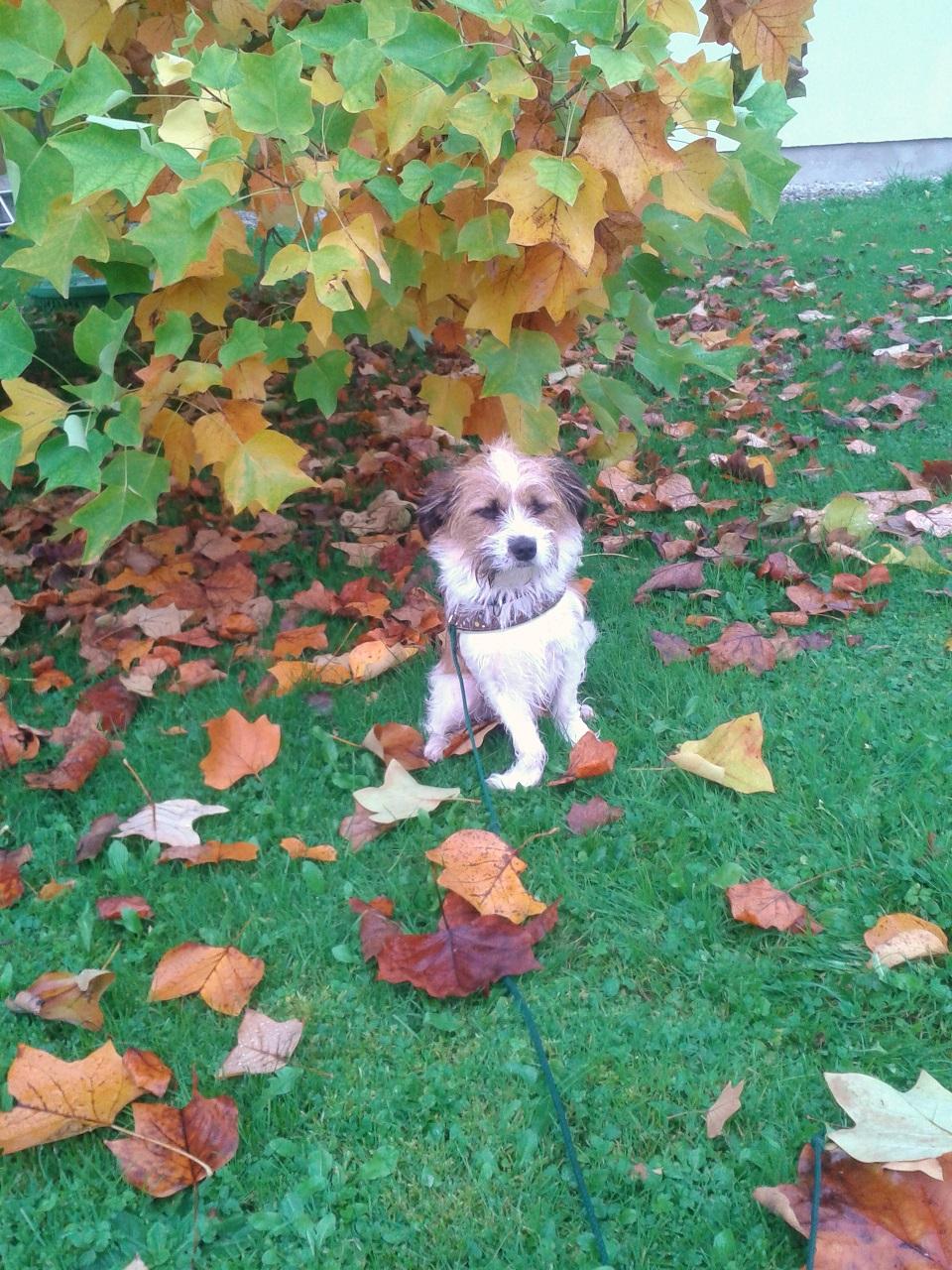 Hund Charly im Regen draußen