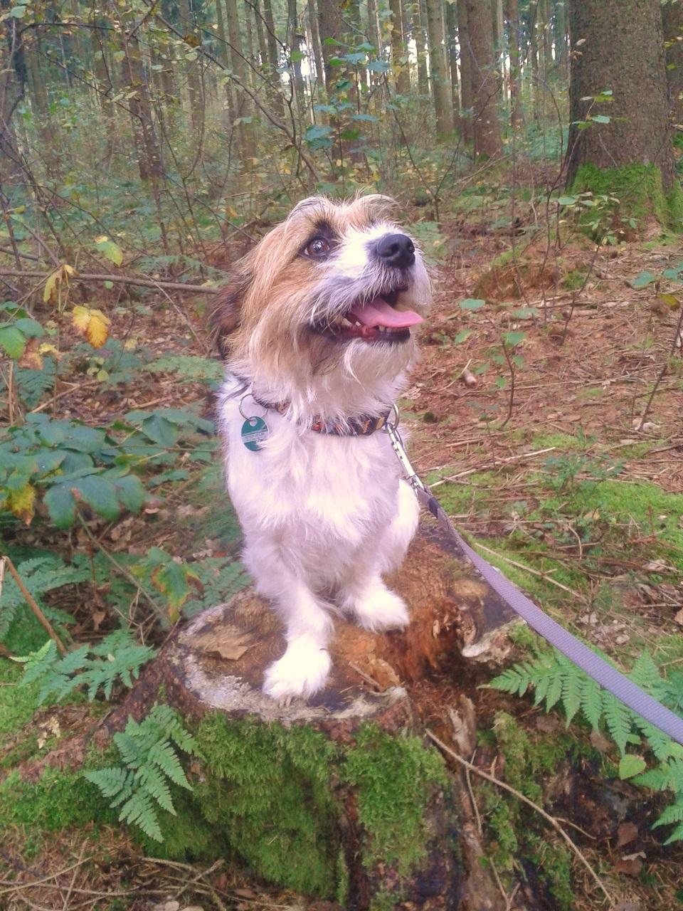 Hund Charly auf einem Baumstamm
