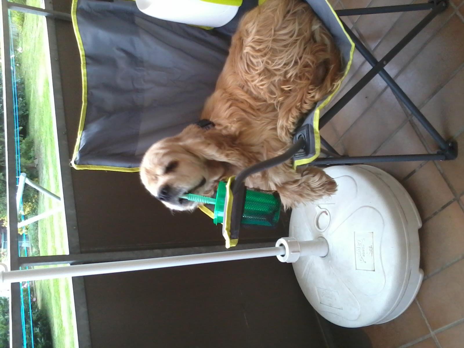 Hund chillt im Stuhl