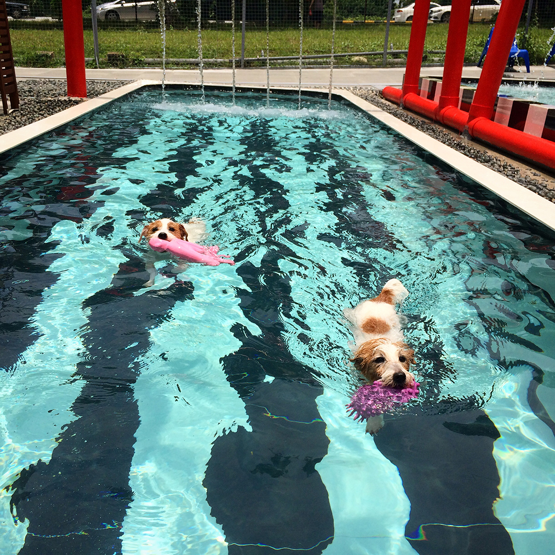 Sam and Pecan at doggie pool