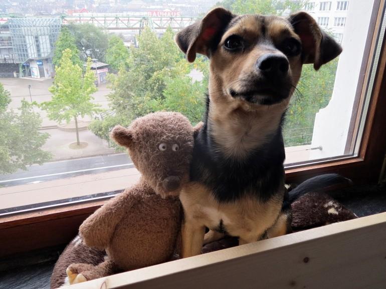 kleine hunde issn 39 r de hunde news dogstyle. Black Bedroom Furniture Sets. Home Design Ideas