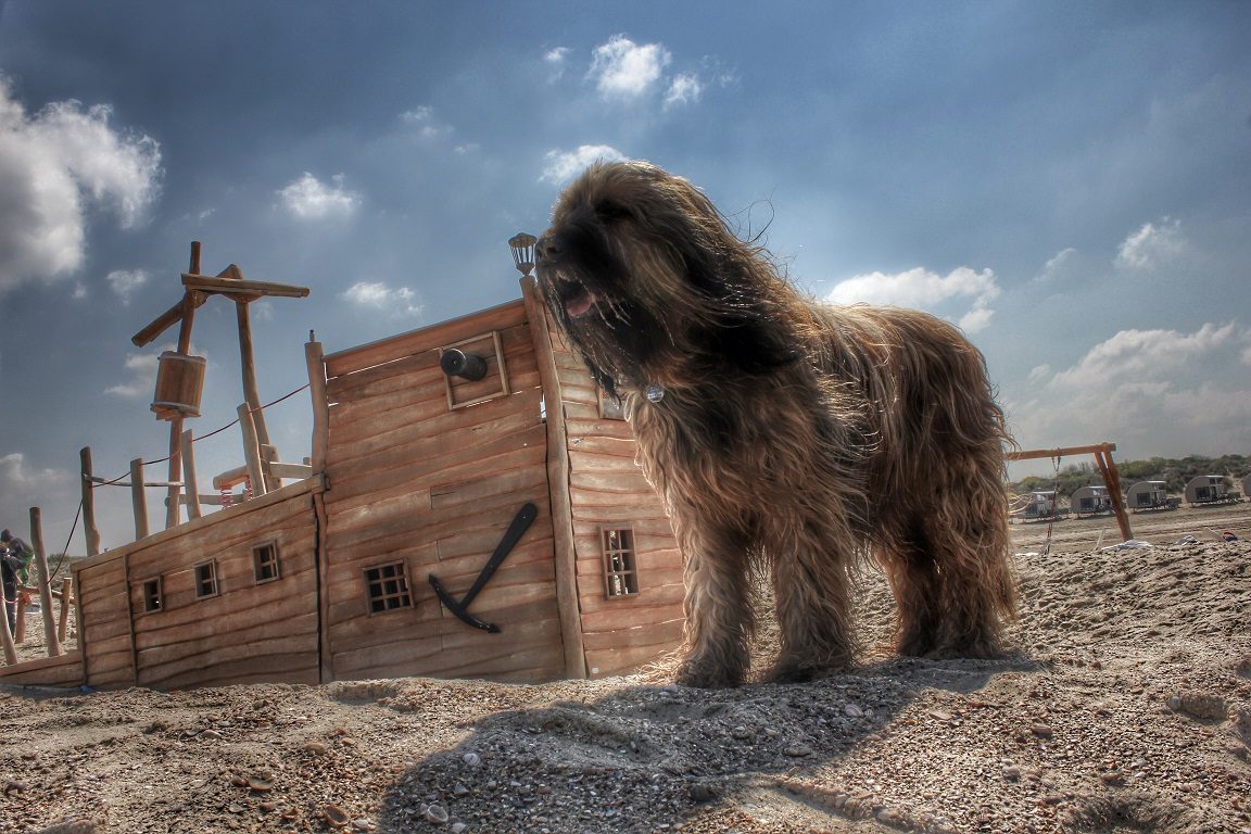 Hund in stürmischen Wind