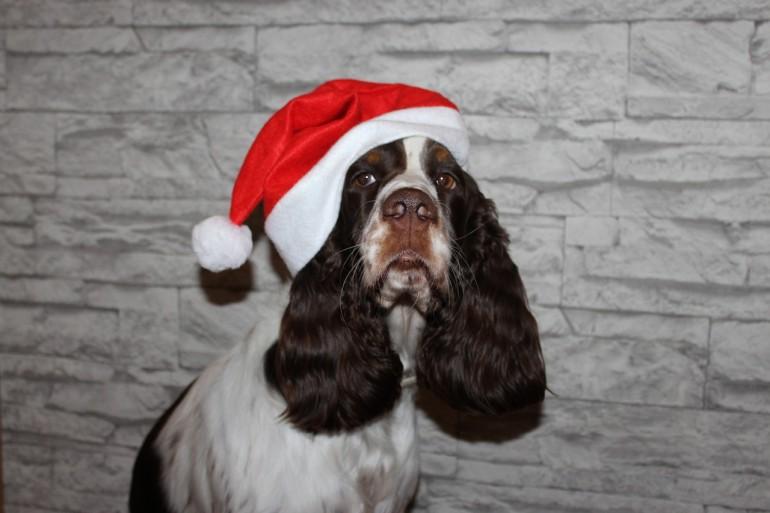 Milow – der verschenkte Hund