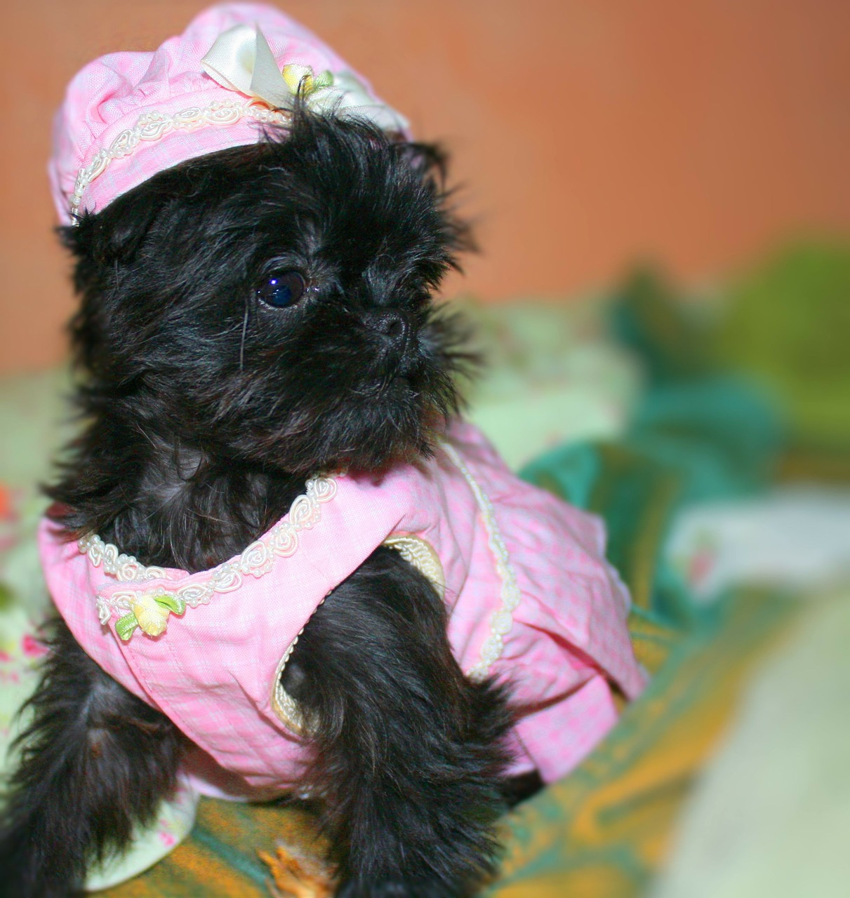 verrückte Hundenamen und lustige Hundeklamotten