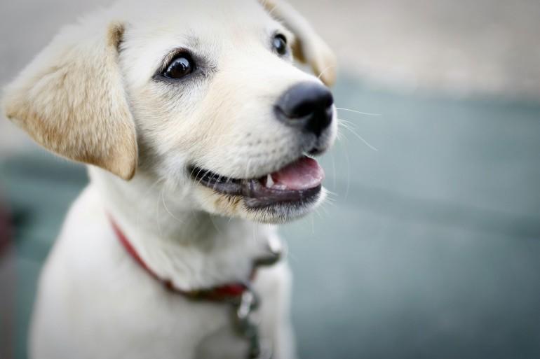 6 Gründe, warum Dein Leben mit einem Hund besser wird