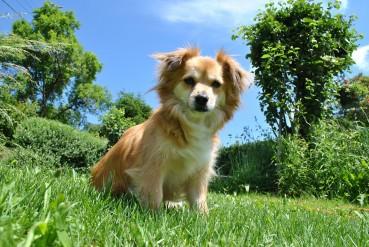 Gute Hundeerziehungsberater trainieren nicht, …