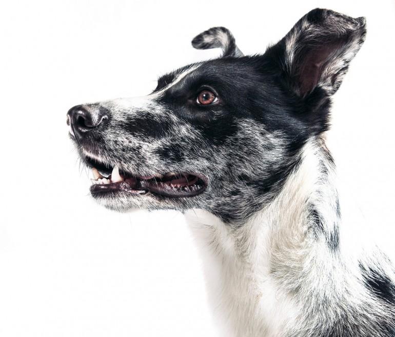 Die Gretchenfrage: Sind Hund und Full-Time-Job vereinbar?