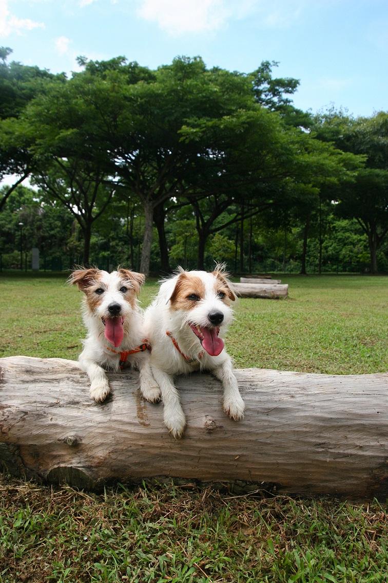sam and pecan at Dog park